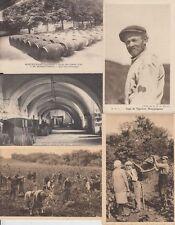 WINE VENDANGES PRODUCTION FRANCE 33 Cartes Postales 1900-1940