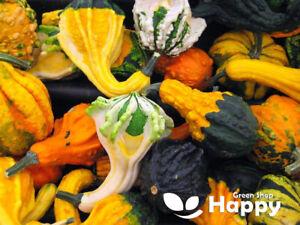 WILDY WEIRD WARTED - 30 seeds - Ornamental Gourd Pumpkin - Cucurbita pepo