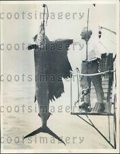 1934 Chicago Fisherman 140 lb Sailfish Caught Hood Island Galapagos Press Photo