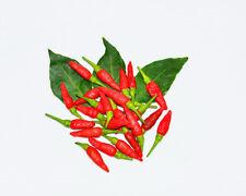 Hot Chilli Pepper-tailandés Hot culinarias - 60 Semillas