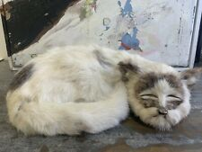 Domestic Cat Oddity Oddities Curiosity Taxidermy Style Ooak Vintage Antique 13�