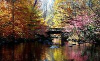 Adult Jigsaw Puzzle Colorful Bridge Lake Trees Autumn Nature Scenery 500-Pieces