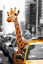 NEW YORK SAFARI GIRAFFE NEW YORK CAB POSTER (61x91cm)  PICTURE PRINT NEW ART