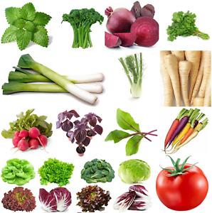 Fresh Herbs Vegetable Fruit Seeds Grow Your Own Indoor Outdoor - First Class