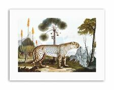 ANTIQUE ZOTL CHEETAH GEPARD Painting Nature Canvas art Prints