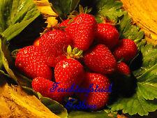 """Hausgemachtes, Fruchtaufstrich, Marmelade""""Erdbeere 2""""  300 ml Glas"""