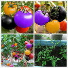 200pcs Seeds Rainbow Cherry Tomato Garden Organic Heirloom Fruit Vegetable Plant