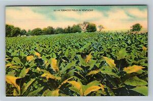 A Tobacco Field, Vintage Kentucky Postcard `
