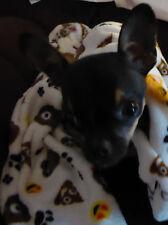 2 Pet or Baby Blankets Super Plush Fleece Emoji Poo Poop Hearts Dog Prints Small