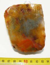 Bois Fossile ( USA - 009 )