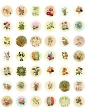 Vintage/ Antique Floral Botanicals ~Printable Bottle Cap Images~ 42 Diff Designs