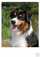 Australian Shepherd Dog Mousemat No 1 by Starprint - Auto combined postage