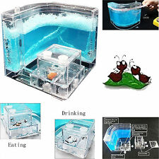 Ant Farm 3D Nursery Maze With Live Feeding System Novelty Habitat Gift