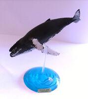 RARE Takara Tomy Kaiyodo Yujin Humpback Whale Fish Secret SP Figure Nice!
