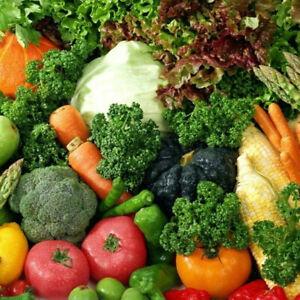 Vegetable Organic Plug Plants Many Varieties Garden Herbs - 24HR DISPATCH