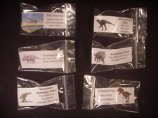 Fossil Collection Dinosaur Bone 6 Different Dinosaur Bone Collection Option 2