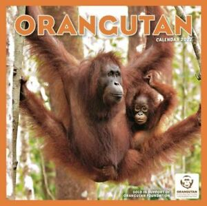 2022 Calendar - Orangutan