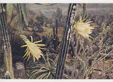 Royal Botanic Gardens Kew Night Flowering Cactus Old Postcard 073a
