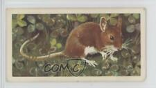 1958 Brooke Bond British Wild Life #33 The Long-Tailed Field Mouse or Wood 4az