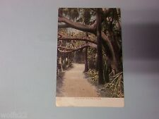 Post Card with Stamp ~ Nov 22, 1906 ~ West Palmbeach, Flordia ~ In the Jungle