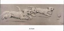 Cecil  Aldin Christmas Geeting Cards-20-Westies-Dog-Mint