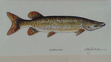 NEW  Watercolor MUSKIE fish print ( MUSKELLUNGE)