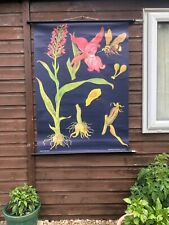 Vintage ORCHID school chart JUNG KOCH QUENTELL botanical poster BOTANICAL bee