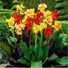 10pcs Rare Canna Lily Seeds - Tropical Scarlet Canna Flower mixed colors