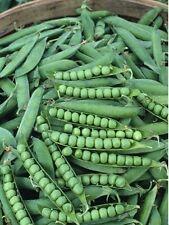 Heirloom GREEN ARROW PEA❋200 SEEDS (2 oz)❋Heavy Yields❋Disease Resistant