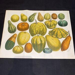 1866-67 Fold-out Van Houtte Flore des Serres Antique Lithograph Print Coloured