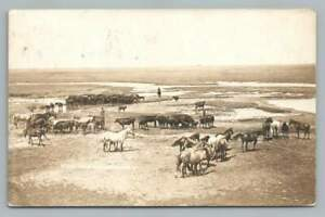 Stock Farm ABERDEEN SD Antique Horse Ranch Photo Brown County Postcard 1910s