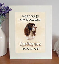 English Springer Spaniel 8 x 10 SPRINGERS HAVE STAFF Picture 10x8 Dog Print