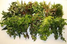 70 schöne Aquarienpflanzen - 10 Arten für ein schön bepflanztes Heimbiotop
