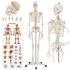Skelett Modell Menschliches Lebensgroß Anatomie Lehrmodell Stativ 181cm | Juskys
