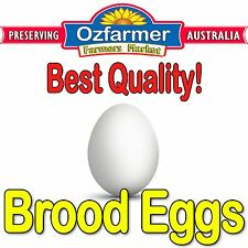 2 x Chicken Laying Wooden Fake Brood Eggs for Poultry Hens For Broody Chooks