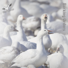 "NEW for 2018 Snows Down Low ""Barking Orders"" Snow Goose E-Caller MicroSD/SD Card"