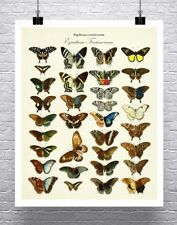 Exotic Butterflies Vintage Illustration Rolled Canvas Giclee Print 24x30 Inches