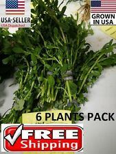 6 bunches moneywort plants Easy Aquarium aquascaping planted tank low light pond