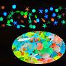 10PCS*Glow In The Dark Sea Shells Starfish Stone Aquarium Fish Tank Conch.UK