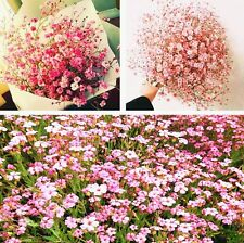 FD4201 Gypsophila Paniculata Flower Seeds Babys Breath Home Garden Decor 50PCs