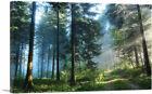 ARTCANVAS Light Through the Forest Trees Canvas Art Print