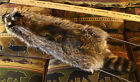 TANNED RACCOON FUR NORTHERN MN QUALITY CABIN GARMENTS GIFT TF36