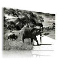 DESERT ELEPHANT Wild And Domestic Animals Canvas Wall Art Picture AN194 UNFRAMED