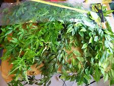Exo Terra Jungle Plant Silk Plants Joblot 6 Reptile Vivarium Gecko Frog Display