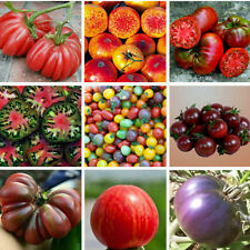 200PC Mixed Tomato Seeds Ornamental Potted Vegetable Fruit Seed Garden TR