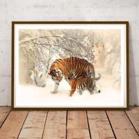 Nature 22 Tiger 34x22 INCHES PHOTO