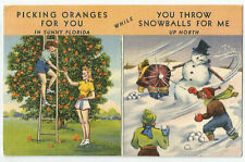 Picking Oranges in Florida while Throwing Snowball for Me Up North Postcard 1941