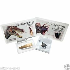 Spinosaurus & Triceratops Teeth Fossils Real Dinosaur Fossil Set with ID Cards