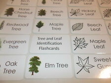 26 Tree and Leaf Identification Flash Cards.  Nature Picture Word Educational ca