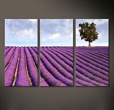 LAVENDEL Leinwand Bild Bilder Floral Lila Violett Baum Blüte Provence Wandbild